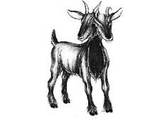 Two_headed_goat