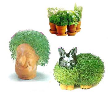 http://www.buying-chia-pets.com/images/buying-chia-pets.jpg