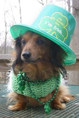 Dog celebrating St Patricks Day-thumb