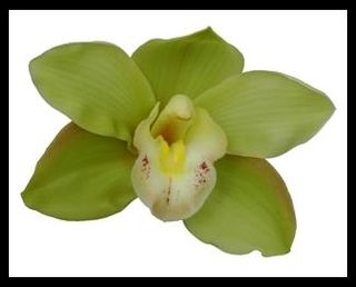 Green_Orchid_Cymbidium_Flower_500