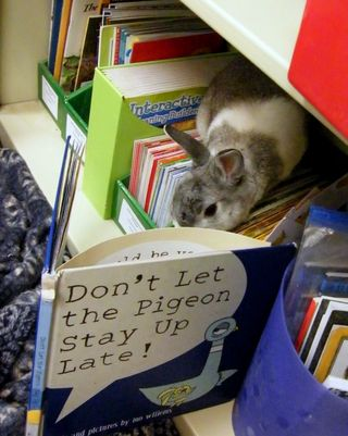 Readingrabbit