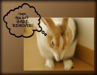 HARE REMOVER copy