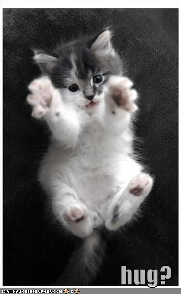 Funny-pictures-kitten-hug