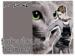 MAC-Fabulous-Felines-1