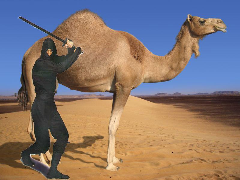 Ninja camel