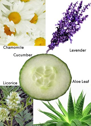 Cucumber, Chamomile, Licorice, Aloe Leaf and Lavender